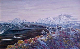 The Shadow of Denali